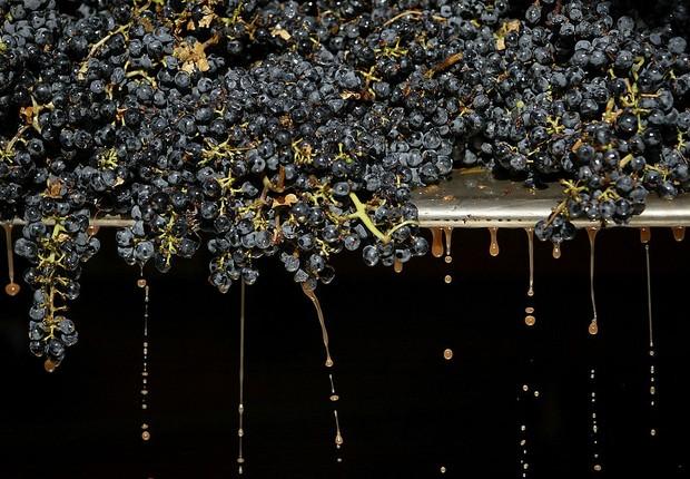 Os vinhos de Napa Valley são famosos nos EUA (Foto: Justin Sullivan/Getty Images)