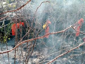 Corpo de Bombeiros atuam no combate às chamas (Foto: Divulgação / Corpo de Bombeiros)
