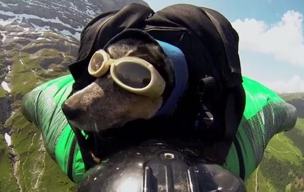 Dean Potter levou cachorro em salto de base jump usando wingsuit na Suíça (Foto: Reprodução/YouTube/Dean Potter)