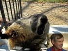 Americano se refugia em casa após ser atacado por marmota furiosa