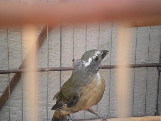 12 aves foram apreendidas e levadas para o Cetas (Foto: Maurício Melo/G1)