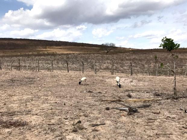 Zona rural de Feira de Santana sofre com estiagem prolongada (Foto: Alan Tiago Alves/G1)