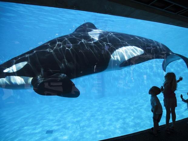 Crianças se divertem observando uma baleia em aquário do parque temático SeaWorld em San Diego, na Califórnia, na quarta-feira (19) (Foto: Mike Blake/Reuters)