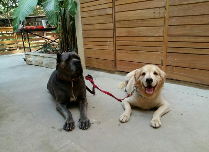 Cachorras de estimação de André Marques participam do 'É de casa' (Foto: Gshow)