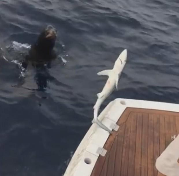 Foca foi flagrada tentando roubar pequeno tubarão de pescador (Foto: Reprodução/YouTube/Jordan Risheq)