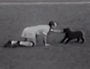 FRAME Cachorro Garrincha (Foto: Reprodução)
