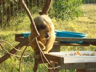 Macacos com parte do corpo amputada voltam à natureza em GO
