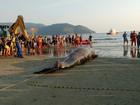 Baleia morta é retirada do mar após 'operação de resgate' em Santos, SP