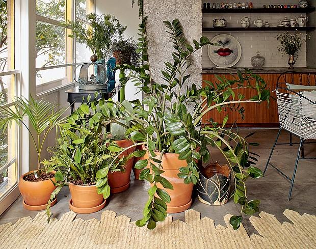 Neste projeto assinado pelo designer Marcelo Rosenbaum e pelo arquiteto Flávio Miranda, a zamioculca foi plantada em um vaso de barro e posicionada no living do apartamento (Foto: Victor Affaro/Editora Globo)