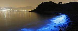 Misteriosas manchas fluorescentes iluminam o mar de Hong Kong  (AP Photo/Kin Cheung)