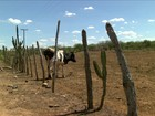 Seca dificulta cada vez mais a vida dos agricultores sertanejos da Paraíba