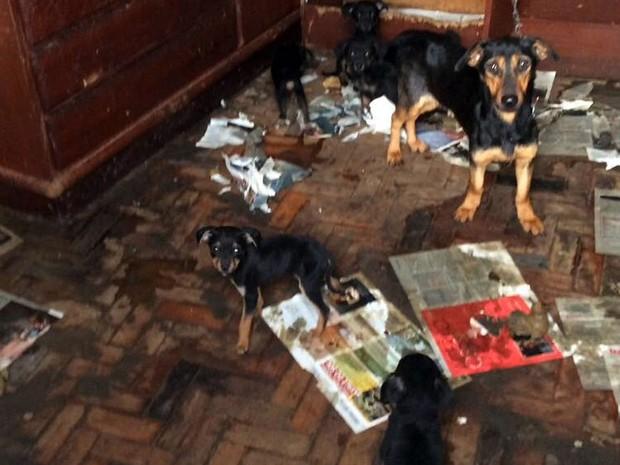 Cães encontrados em condições precárias em residência de Campinas (Foto: Reprodução EPTV)