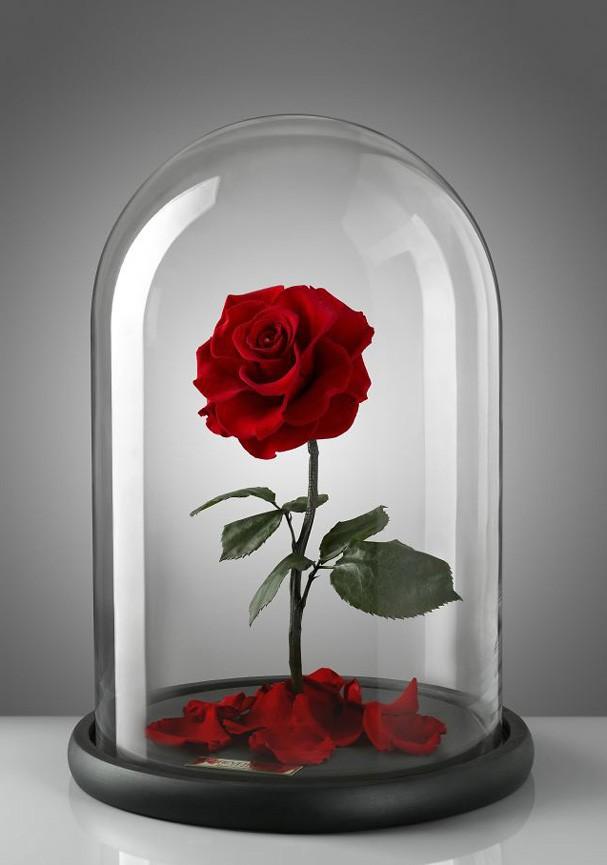 Forever Rose vende rosas de luxo no Oriente Médio (Foto: Reprodução/Instagram)