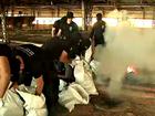 Polícia Civil incinera 300 quilos de droga em olaria de Rio Branco