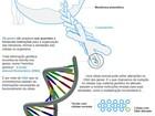 Quimioterapia prejudica pacientes com câncer terminal, sugere estudo
