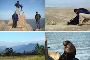 Equipe filma leões-marinhos (Arquivo TG)