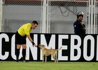 Cachorro em Zamora x Grêmio (Foto: AFP)