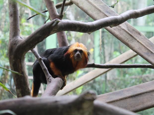 Trabalho de conservação dos micos é feito no zoo (Foto: Rafael Pagani/Zoo Pomerode)
