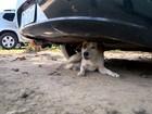 Moradores de Manguinhos reclamam de ataques de cachorros, no ES