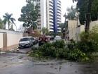 Árvores caem e bairros ficam sem energia durante chuva em Manaus