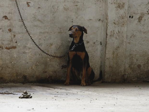 Cães encontrados em depósito abandonado terão novo lar (Foto: Vanessa Silva/PMPA)
