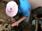 Município de MS decreta emergência por alta infestação de Aedes aegypti