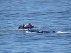 Barco naufraga em São Vicente, SP, e três pessoas são resgatadas com vida