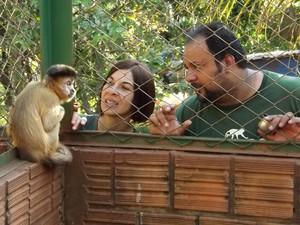 Macaco-prego recebe os cuidados necessários na ONG em Assis  (Foto: Alan Schneider/G1)