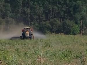 Preço do milho anima produtores do Triângulo Mineiro (Foto: Reprodução/TV Integração)