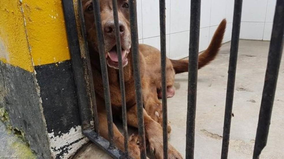 Choko trabalha desde que é um filhote e deve se aposentar daqui a três anos (Foto: DIMITRI O'DONNEL/BBC)