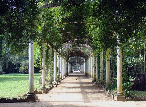 Jardim Botânico do Rio de Janeiro (Foto: Rodrigo Soldon/Flickr)