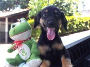 Cerca de 50 animais estarão disponíveis para adoção  (Foto: Divulgação)