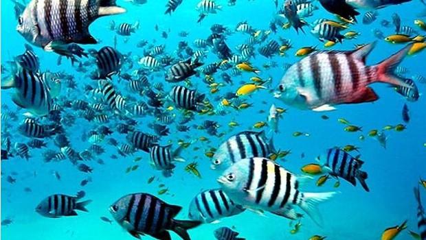 Mergulho com os peixes é só um dos atrativos do programa  (Foto: Reprodução EPTV)