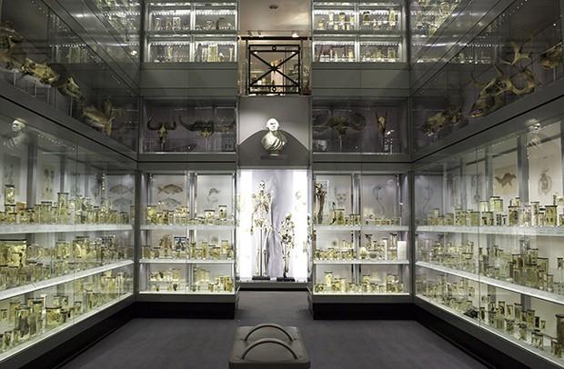 Museu de Anatomia Humana Hunterian, no Reino Unido (Foto: Divulgação)