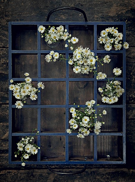 Margaridinhas em vidros, distribuídos num engradado, formam uma floreira móvel. Não precisa preencher todos os espaços, a graça está na disposição aleatória das flores (Foto: Foto Cacá Bratke/Editora Globo | Realização Cláudia Pixu | Produção Ellen Annora)