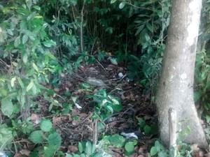 Local onde o bebê foi encontrado, a menos de dez metros das mulheres. (Foto: Camila Torres / TV Globo)