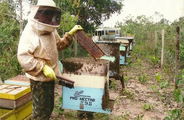 Apicultor durante colheita do mel em Vilhena (Foto: Juarez Bruno/Divulgação)