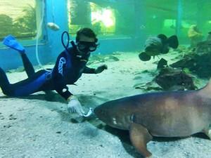 Na Ilha dos Aquários, na Bahia, Eduardo Lacerda entra em um aquário repleto de tubarões-lixa para alimentar o grande peixe. (Foto: Arquivo TG)