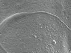 Espermatozoide de 50 milhões de anos é encontrado na Antártica