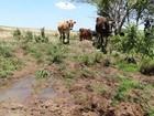 Governo do RS divulga cidades que receberão verba de ajuda para seca