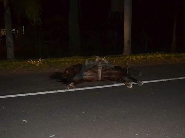 Cavalo morreu após ser atingido por carro em Tupã (Foto: Diego Pereira/Mariane Gava/Mais Tupã/Divulgação)