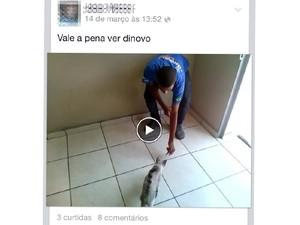 Jovem oferece biscoito ao felino e joga o gato longe usando o pé. Autor do vídeo publica as imagens no Facebook. (Foto: Reprodução / Facebook)