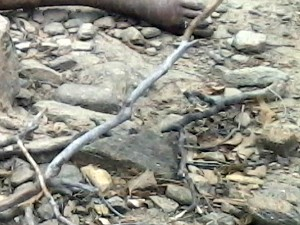 Criança foi encontrada em matagal (Foto: Polícia Civil/Divulgação)