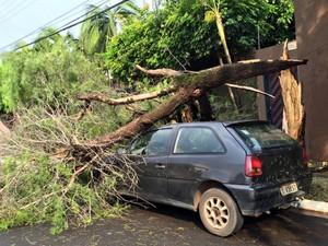 Árvore cai em cima de carro em Araraquara (Foto: Norberto de Freitas/Arquivo pessoal)
