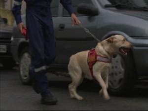 Cães farejadores ajudaram na operação (Foto: Reprodução RBS TV)
