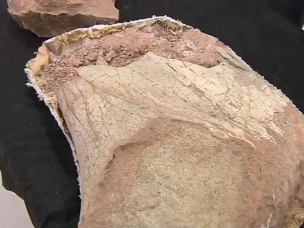 Escavação indica indícios de vida há 65 milhões de anos na região de Marília (Foto: TV TEM/Reprodução)