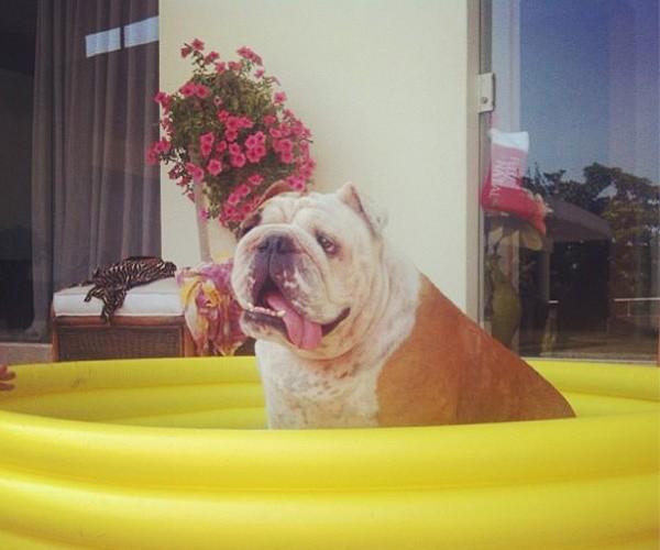 Gorda, cachorrinha de Gracyanne (Foto: Reprodução/Instagram)