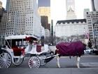 Acordo proíbe passeios de carruagens em ruas de Nova York