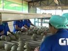 Com dólar em alta, cresce lucro de exportadores de melão do RN