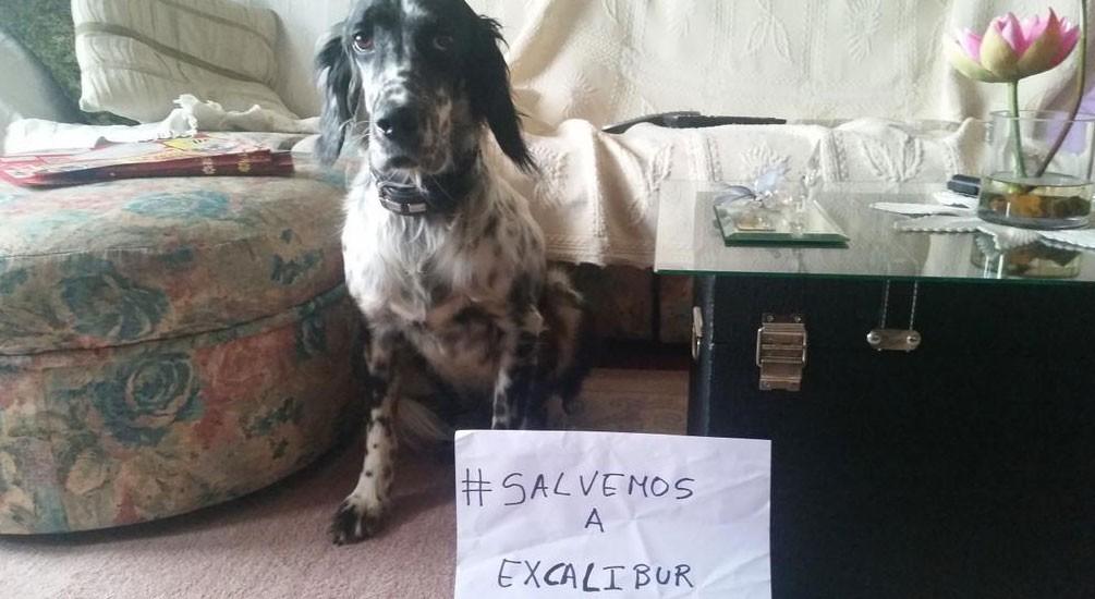 """Usuária @nereaparte colocou foto de seu cão com a hashtag """"vamos salvar o Excalibur"""" (Foto: Reprodução/Twitter/@nereaparte)"""